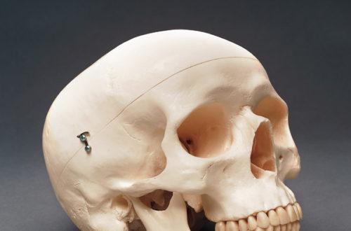 Article : Cameroun: Le culte des crânes en pays bamiléké